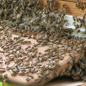Warum kristallisiert der Honig und ist das ein Qualitätszeichen?